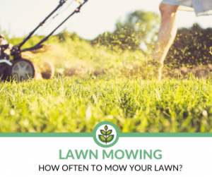 How often to Mow Lawn?