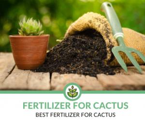 Best Fertilizer for Cactus