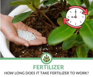 How long does it take fertilizer to work?