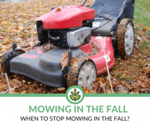 When to Stop Mowing in the Fall?