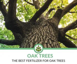 Best Fertilizers for Oak Trees