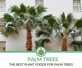Best Plant Foods for Palm Trees