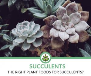 Best Plant Foods for Succulents